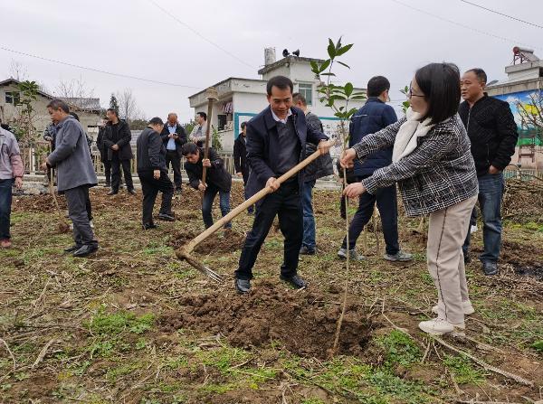 正安:石屏镇家家户户都在新年的第一天种树