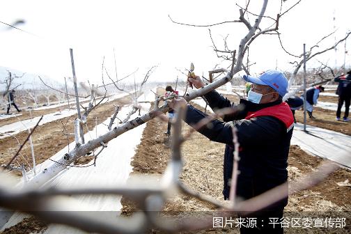 春耕处处忙 平谷努力确保今年农业生产和收入稳定增长