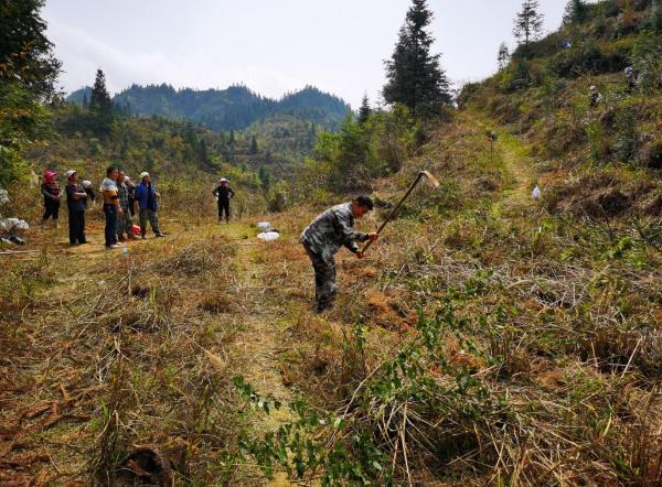 从江县翠里乡:油茶种植正当时 林下经济续写产业振兴