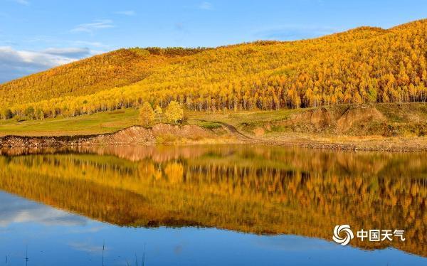 惊艳了秋天 大兴安岭层林尽染美景如画