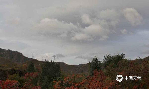 秋风扫落叶!北京延庆漫山红叶飘落 一派深秋景象