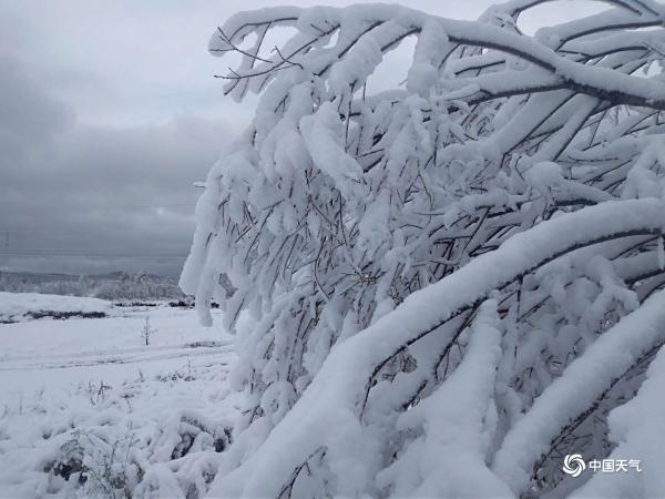 冷空气发威!内蒙古多地迎降雪 大地一片白茫茫