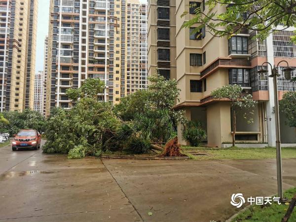 """台风""""浪卡""""在海南制造大风 海口路边树木折断"""