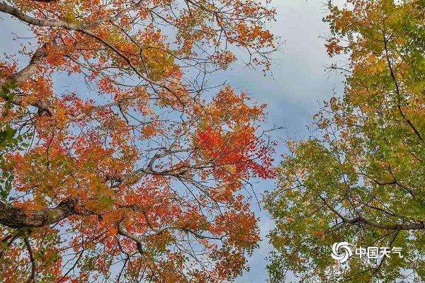 色彩斑斓 北京植物园秋色渐入佳境
