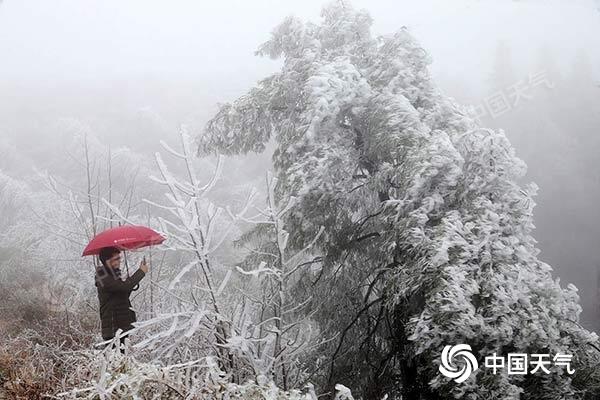 重庆多地迎雾凇美景 今日东部高海拔地区仍有降雪