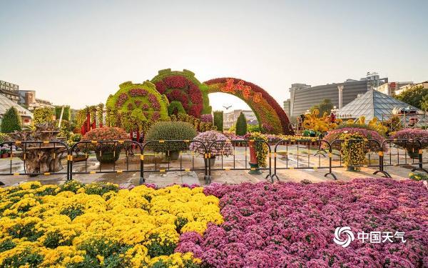 广西桂林迎菊花展 多彩菊花千姿百态