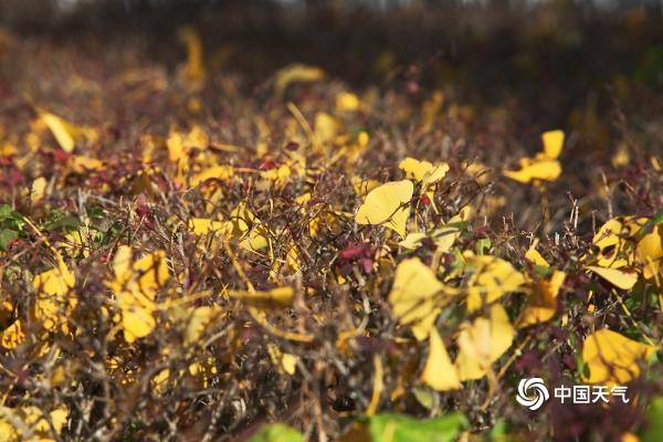 满园秋色!北京故宫筒子河畔秋意盎然