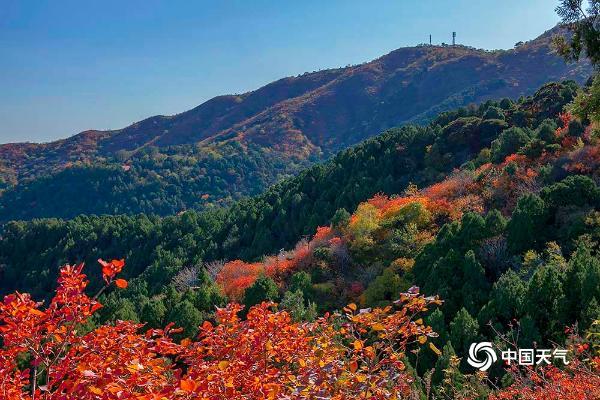 北京香山开启红叶盛宴!如火似锦尽显秋日之美