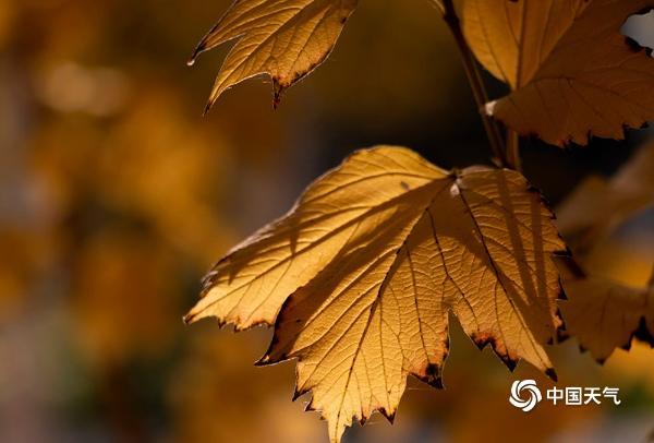 青海西宁:深秋时节人民公园景色满园惹人醉