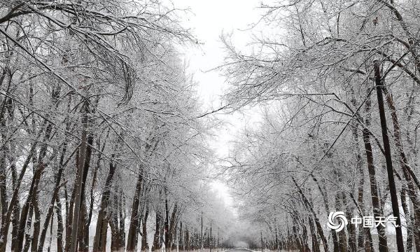 新疆伊犁霍城县迎大范围降雪 天地美如画