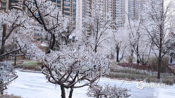"""黑龙江吉林现少见冻雨天气 草木披冰甲如""""钻石"""""""