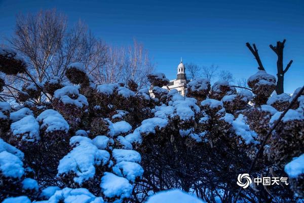 哈尔滨迎立冬后首场降雪 树枝挂满银条晶莹剔透