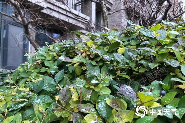 下雪了!北京小雪节气前夕喜提今冬初雪 较常年同期偏早