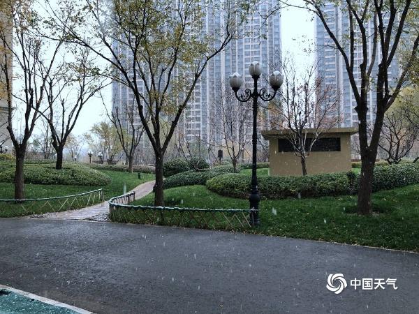 北京下雪啦!一组图直击北京多地降雪现场