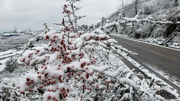 下雪啦!贵州多地今冬初雪悄然而至 天地浑然一体
