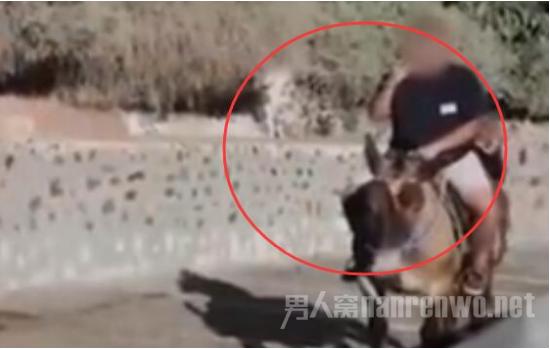 【幼儿园管理制度】禁止肥胖游客观光 希腊政府为保护代步驴发布新