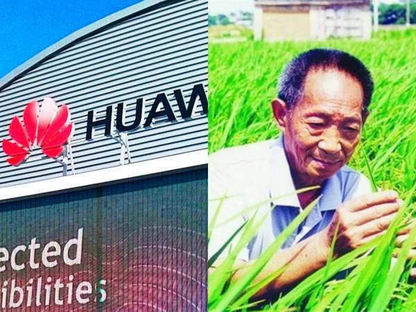 华为宣布与袁隆平合作 培养海水稻,助力农业智能化!
