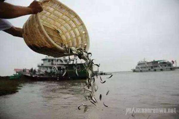 长江十年禁渔 让其休养生息 网友:鱼不会涨价吧