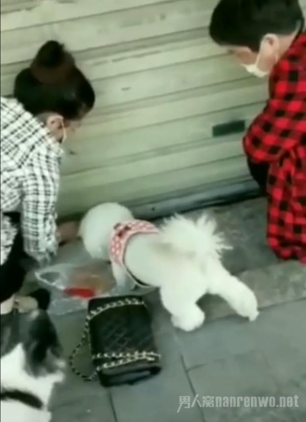 武汉市民门缝投喂滞留猫咪 网友:这才应该是人的本性