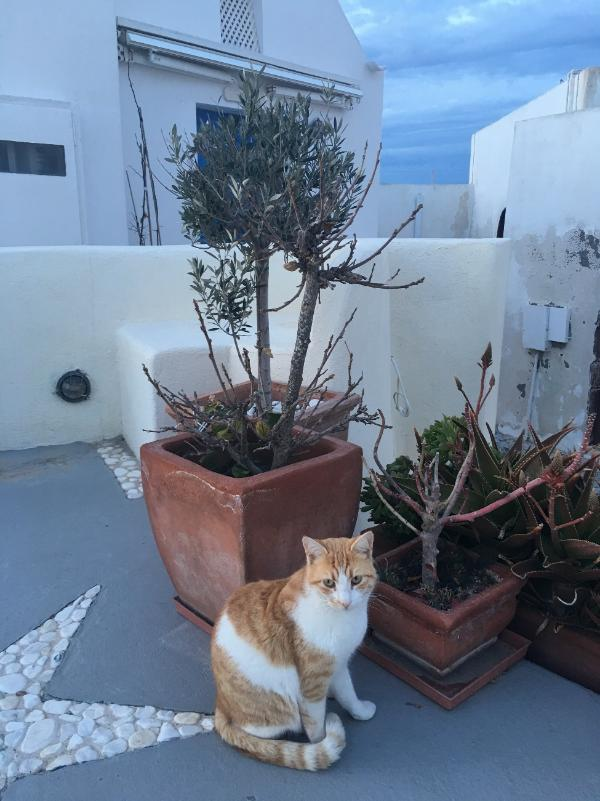 """艾博扮演小猫""""白菜""""的角色 太可爱了"""