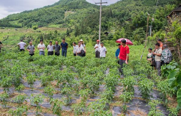 从江县翠里乡: 种植业实用技能培训,促产业发展助力脱贫攻坚