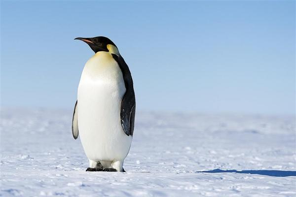 Linux统计:近2万名作者 代码数超2500万行