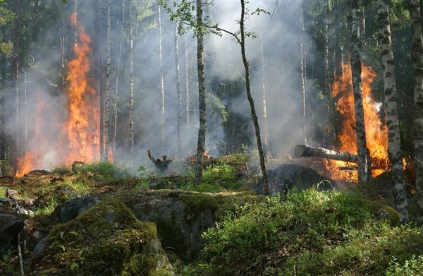 世界气象组织:气温升高和气候干燥导致多起火灾