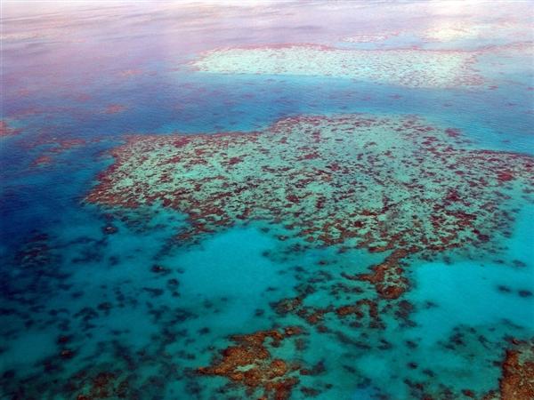 研究表明:珊瑚分裂繁殖能够提高大堡礁的复原力