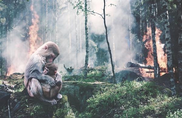 小李子莱昂纳多捐款亚马逊雨林