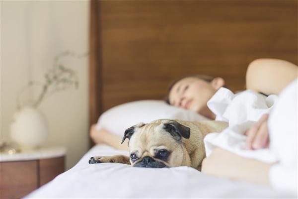 醒醒 别天天午睡了!研究发现每周午休一到两次能够降低48%心脏病发作/中风风险