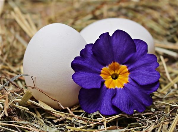 鸡蛋:我太难弄了 研究发现吃鸡蛋并不意味着摄入更多的饱和脂肪