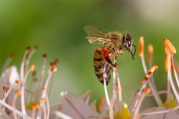 该少用点农药了!新报告指出40%的昆虫物种将灭绝