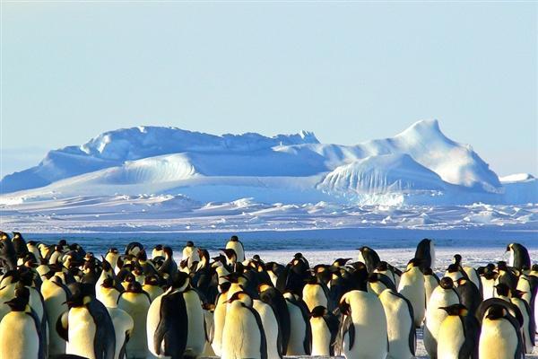 帝企鹅之殇!全球变暖 海冰融化:2100年或将灭绝