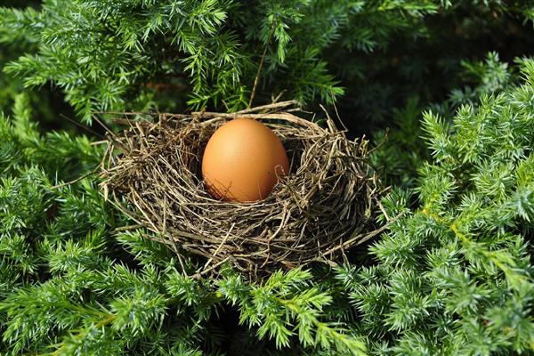 居民疯狂囤货:美国鸡蛋价格刹不住车、创下新高