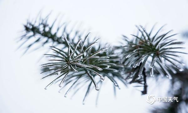 福建福州现雨凇景观 冬日美景醉游人