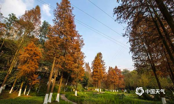 重庆彩云湖湿地公园秋景犹存 色彩斑斓