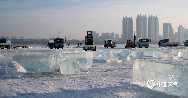 冰雪美景制造者 哈尔滨松花江上的采冰人