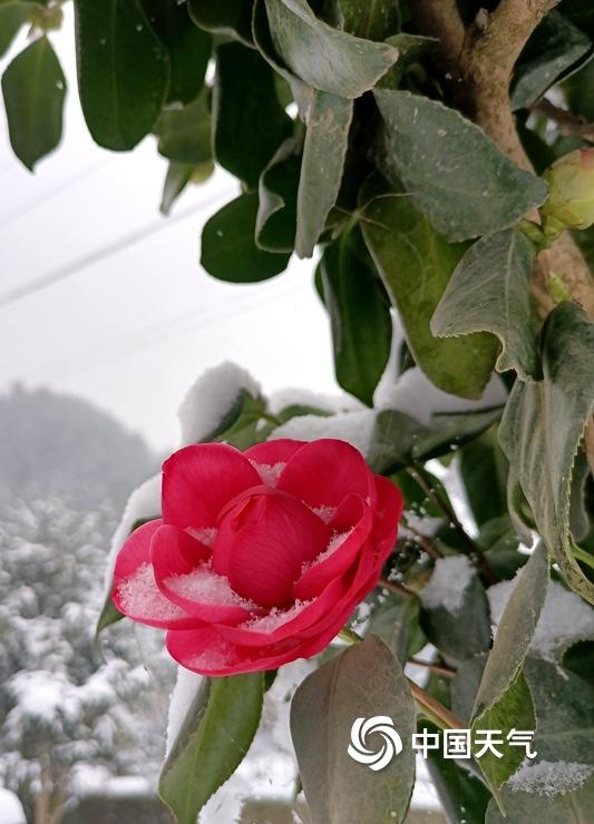 湖北多地迎新年首场降雪 宛如冰雪世界