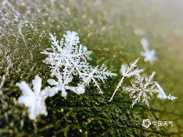 从宏观上看 北京雪花像艺术品一样晶莹剔透