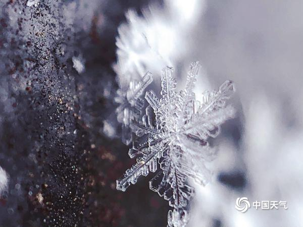 微距看北京雪花 晶莹剔透如艺术品