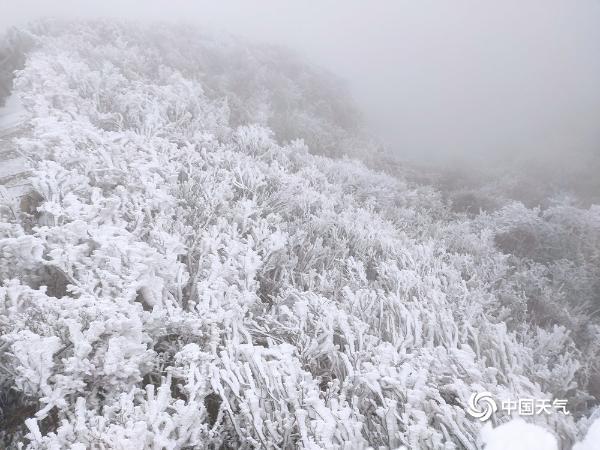 银装素裹!冷空气影响广东 粤北多地现雾凇冰挂等景观