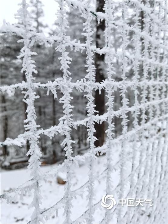 云南丽江玉龙雪山迎来了降雪 变成了白色的世界