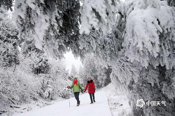 元旦雪后初晴 重庆金佛山八面山美如仙境
