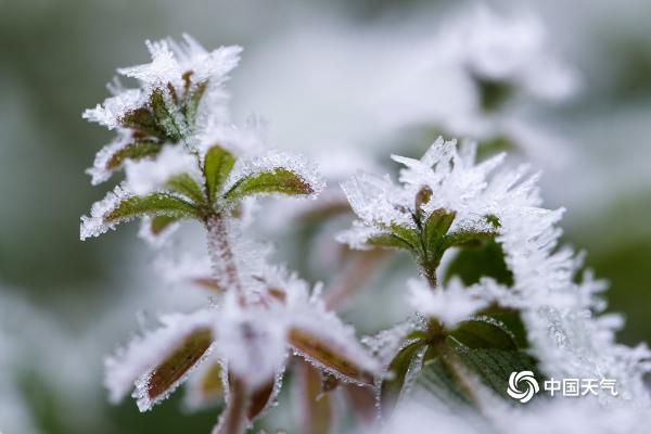贵州玉屏:绿植披霜花隐现朦胧美