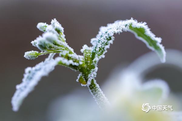 贵州玉屏:绿植穿戴霜花 若隐若现呈现朦胧美