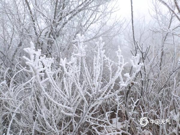 北京佛爷顶雪花与雾凇不期而遇 交织成一幅冬日美景
