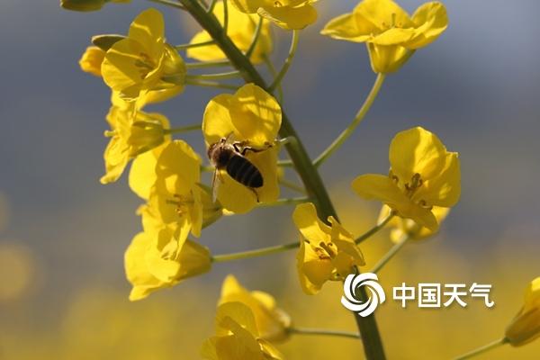 春天的脚步离长江流域不远了!速看这份最新全国入春进程图