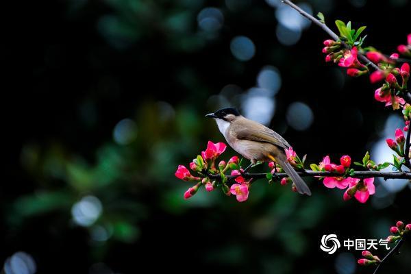 贵州贵阳:和风送暖 鸟语花香春意浓