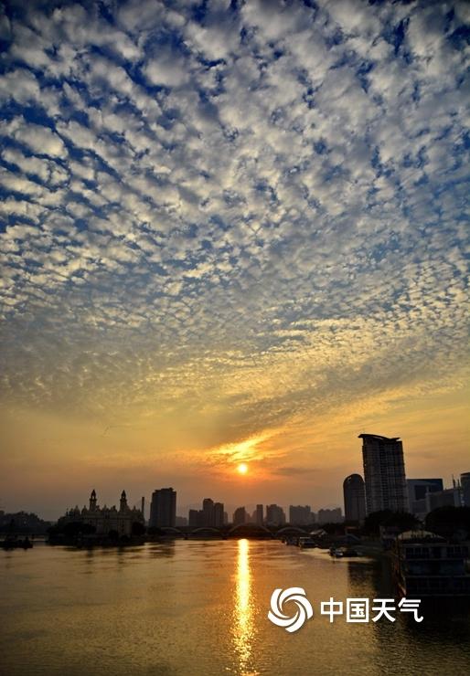 福建福州:鱼鳞云金色晚霞齐现天空 层层叠叠场面壮观