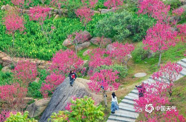生机勃勃!广西南宁桃花岛鲜花俏丽吸引游人